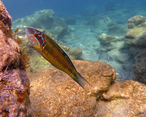 Abhängigkeit Deutschlands von Fischimporten nimmt 2013 weiter zu