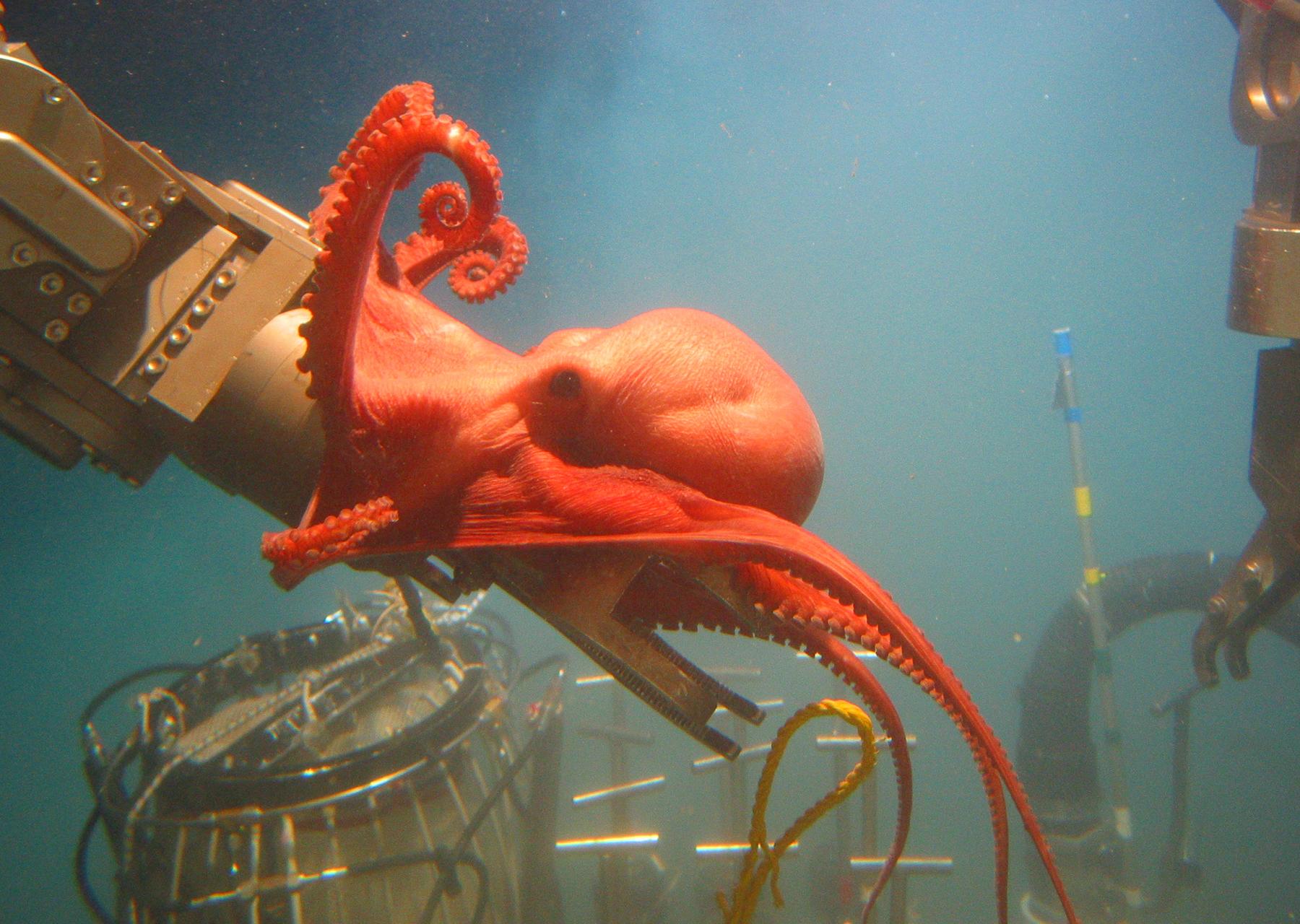 Tiefseebergbau im Pazifik – Speakers Tour