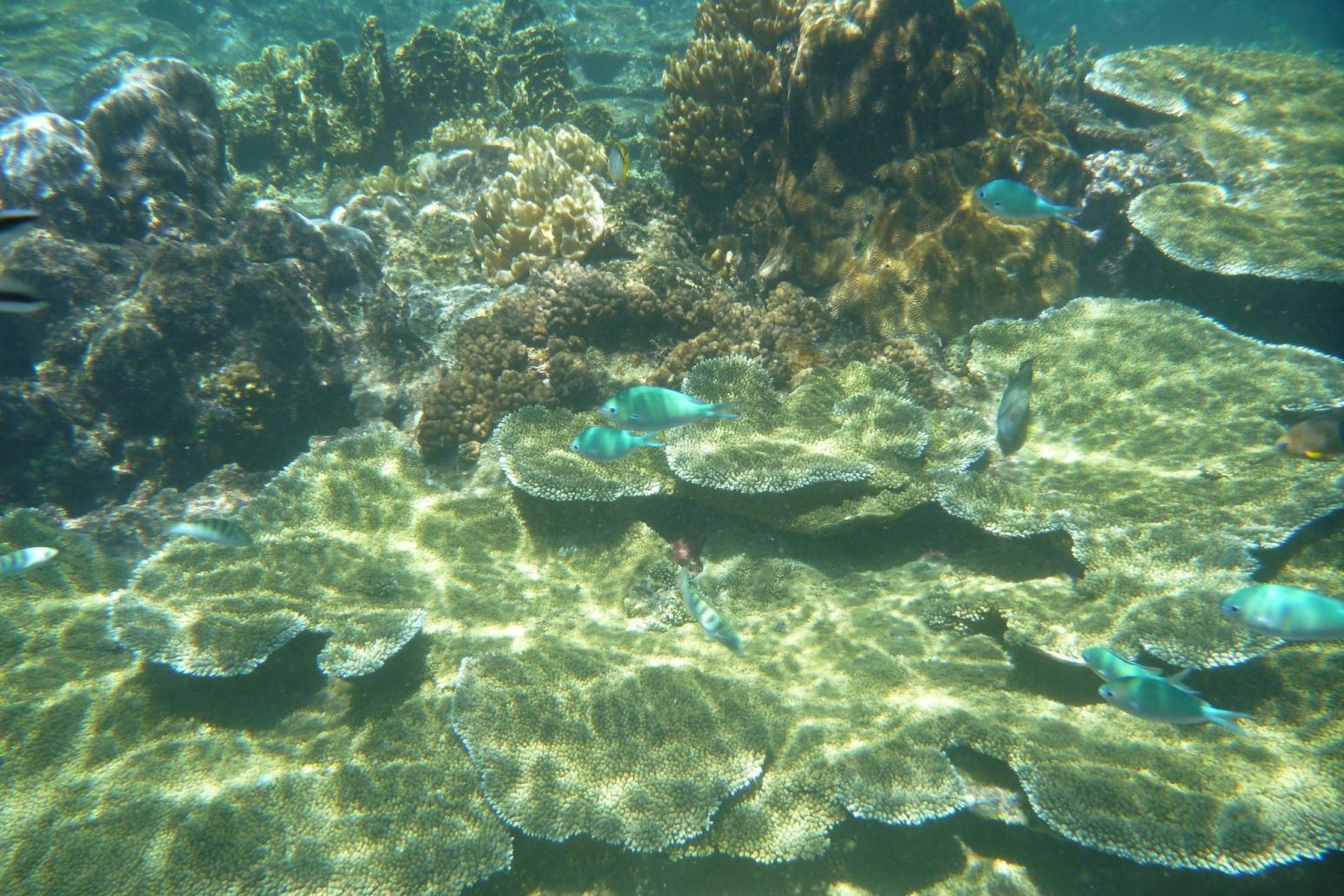 Interview mit Prof. Dr. Christian Wild zum Internationalen Korallenriff Symposium und der globalen Gefährdung der Korallenriffe