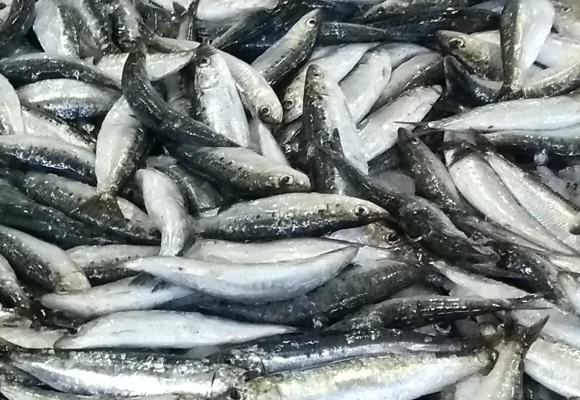 Das Geschäft mit dem Fischmehl in Westafrika boomt – das Nachsehen hat die traditionelle Kleinfischerei – März 2021