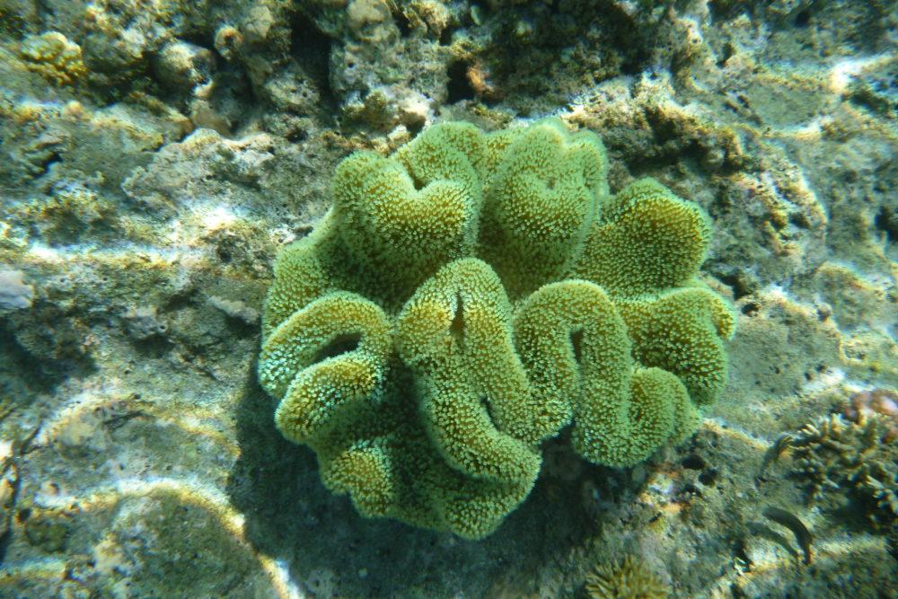 Das Sterben der Korallenriffe – Interview mit Sebastian Ferse (ZMT)