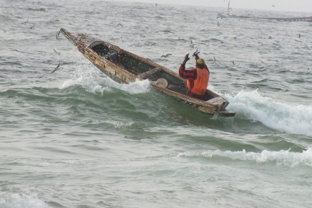 Studie: Wie der Klimawandel die Fischerei verändert